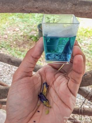 Blue Ternate